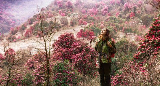 Ghorepani Trek in Nepal